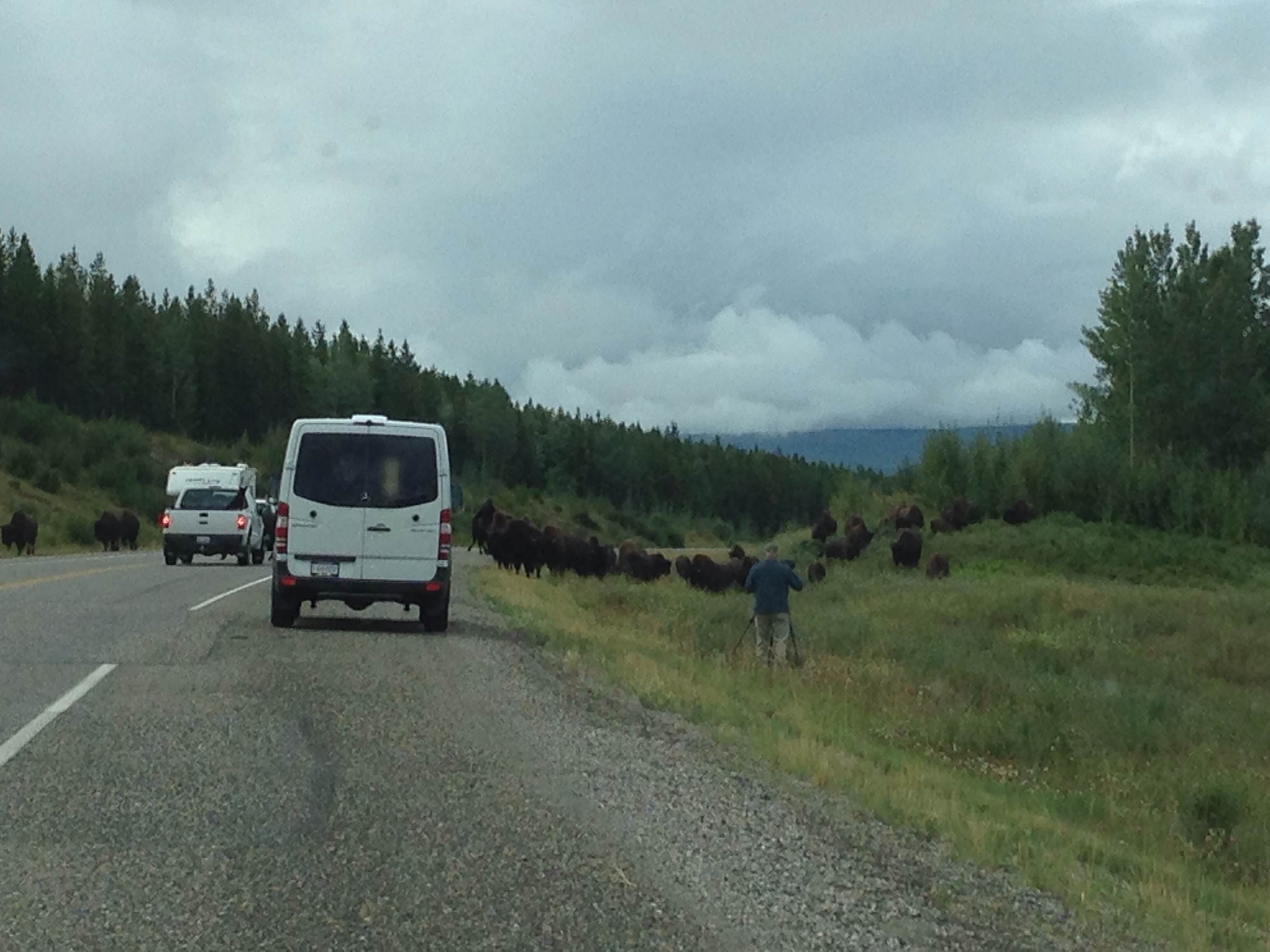Dumb guy who hopefully was not gored by bison