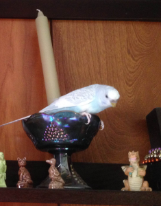 Mr. Ernie-Bird sitting in a candle holder where he does not belong