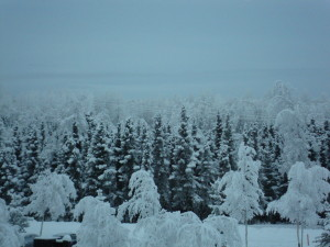 snowy and frosty trees