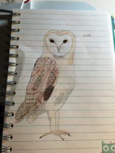A hand drawing of a barn owl