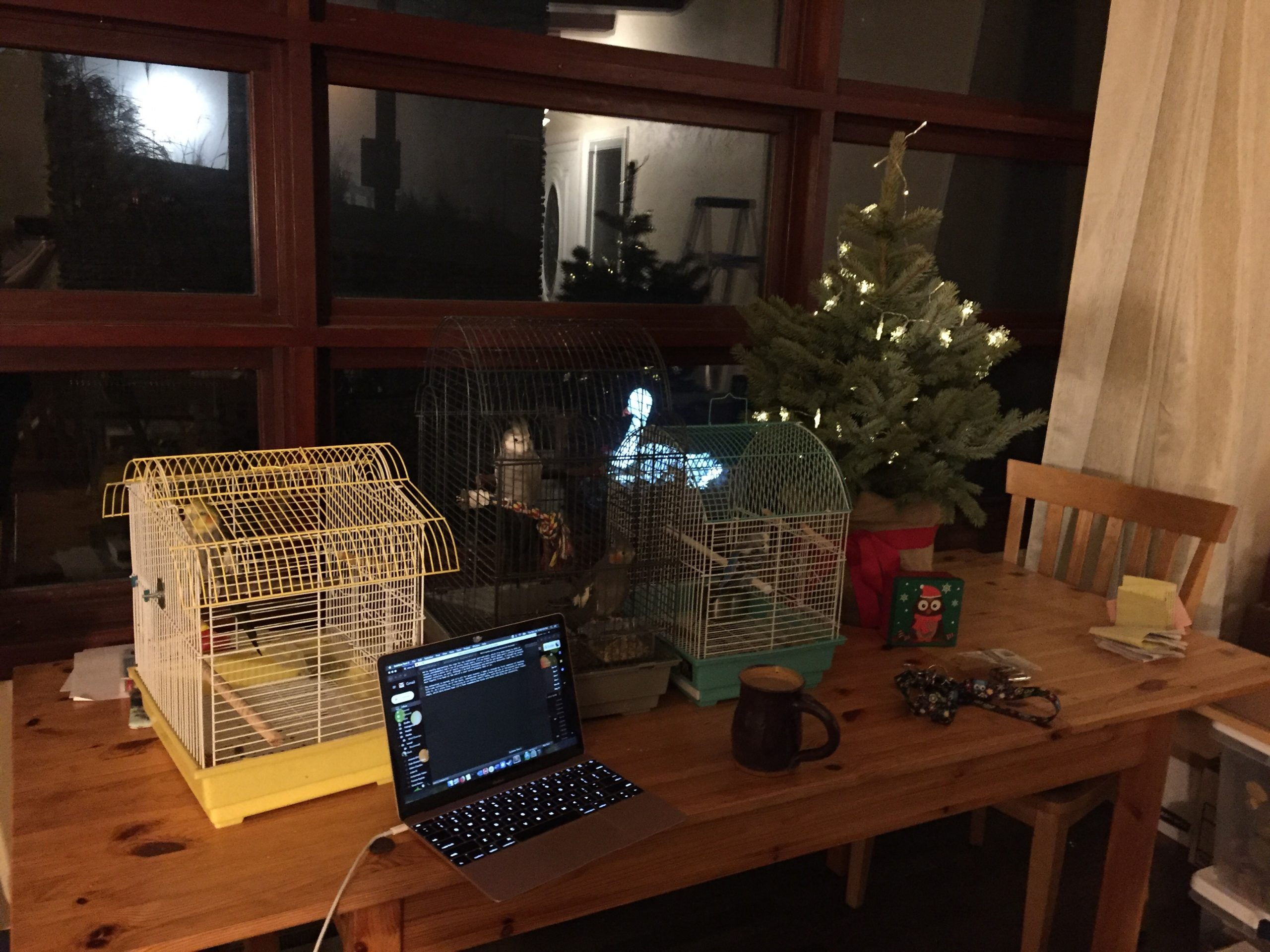 A table in front of a window at night. On the table there is a laptop, three bird cages with four birds in them, a small live spruce tree with lights, a coffee cup, and various detritus that comes with moving.